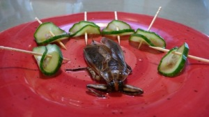 Plate_waterbug_blog_main_horizontal